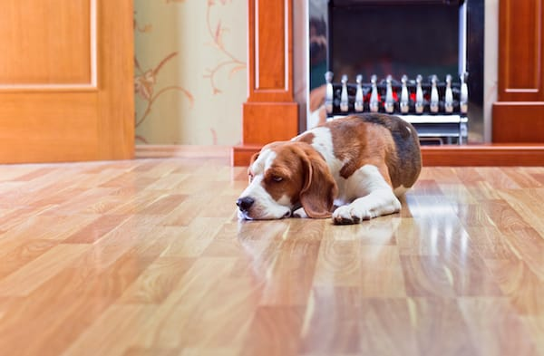 Are Your Tile and Hardwood Floors Really Clean